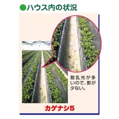PO カゲナシ5(加工品)