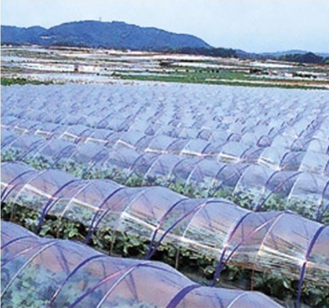 農業用ポリエチレン(農ポリ)透明