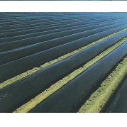 国産黒マルチ 厚さ0.02mmX長さ400m