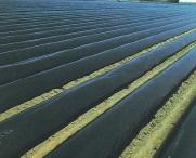 国産黒マルチ 厚さ0.05mmX長さ100m