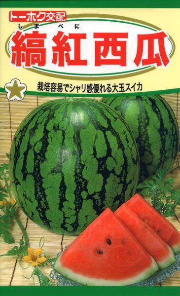 F1 縞紅西瓜