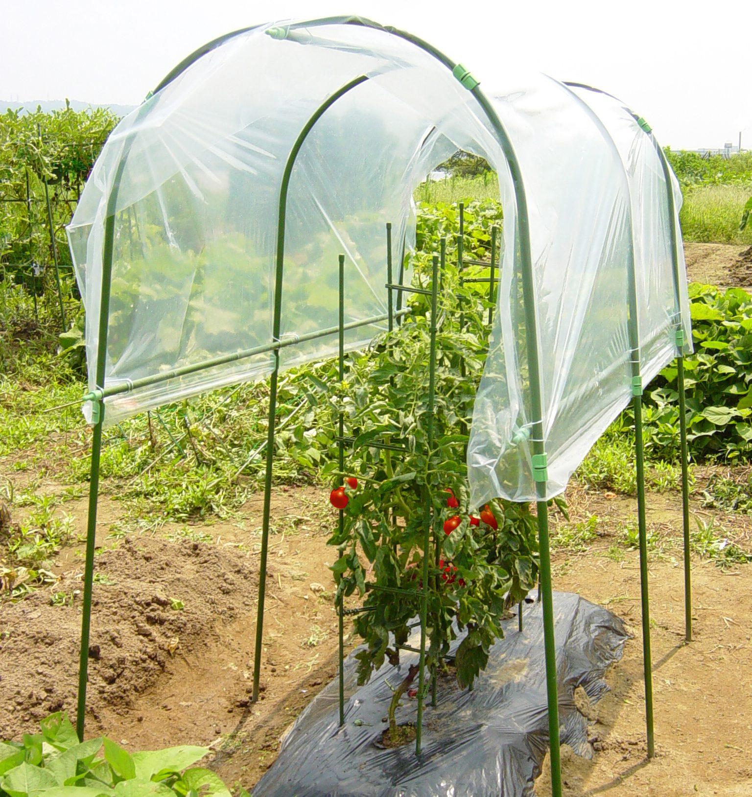 雨除け栽培セット